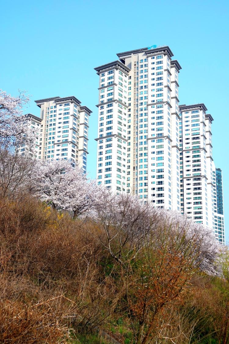 Seoul_trip (17)
