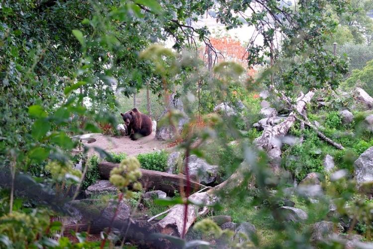 stockholm-skansen-bear